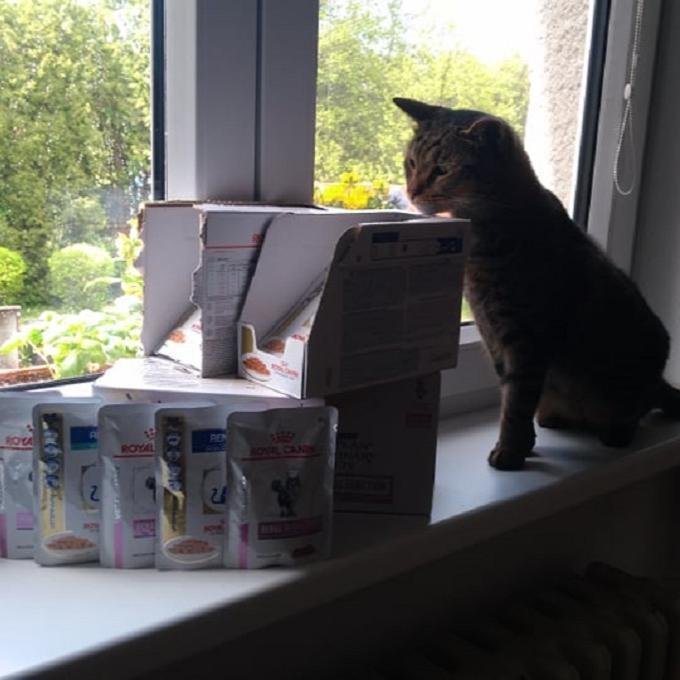 Katík ledvinář