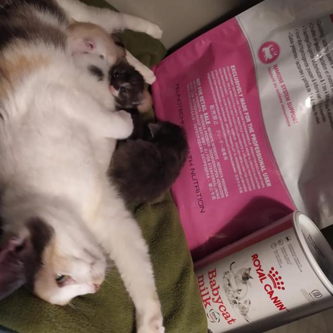 4 koťata od maminky Jarmilky