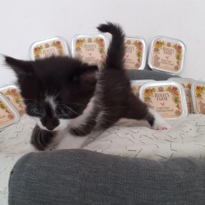 Kotě od Fialky č. 1