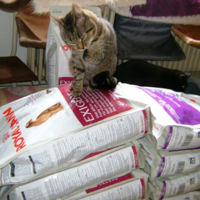 Kvalitní granulky kočičkám z Šance pro kočku