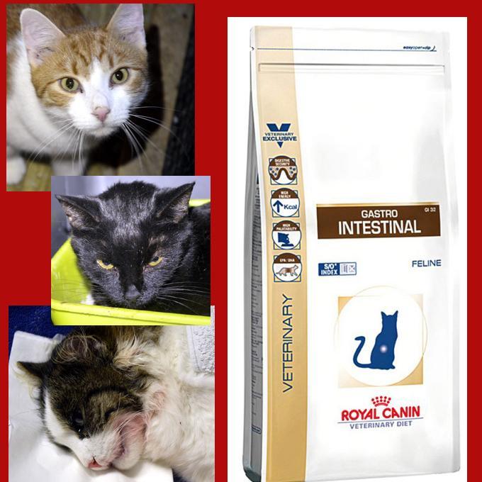 Nemocné kočičky prosí o dietní krmivo