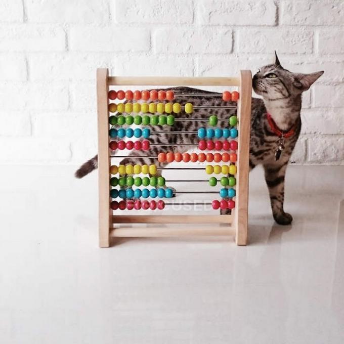 Reklama pro Kočičí přání