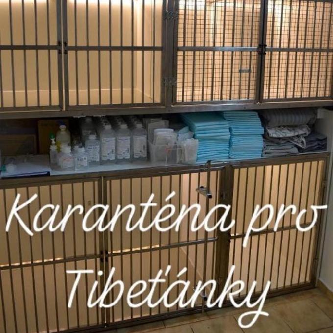 Karanténní boxy pro Tibeťánky