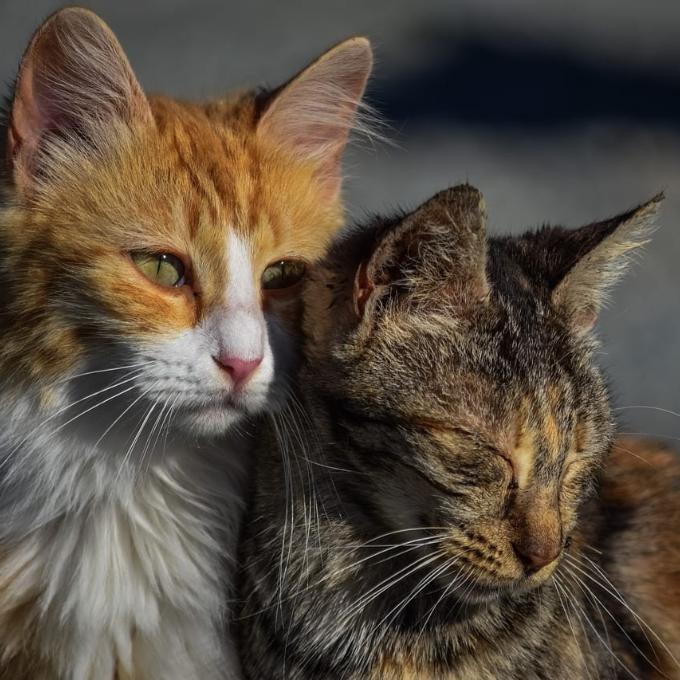 Vakcinace a kastrace koček