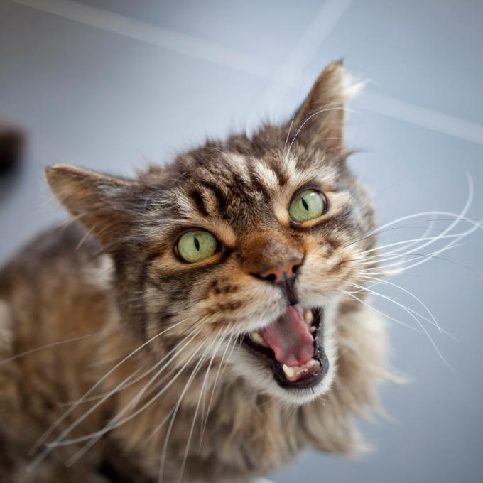 Konzervy pro věčně hladové bruntálské kočky