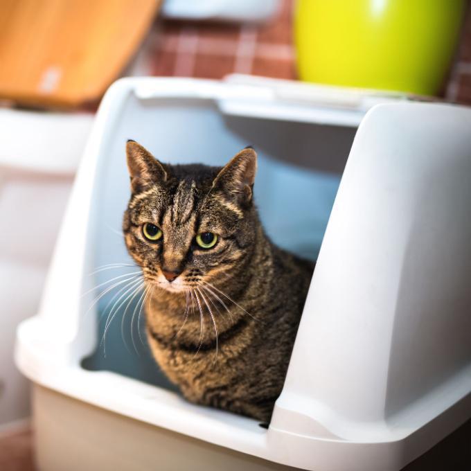 Probiotika pro kočky