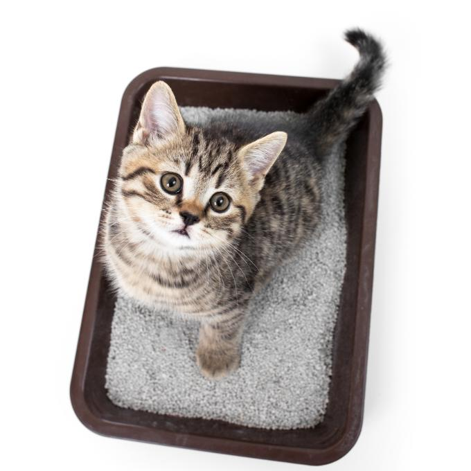 Stelivo pro Kočky u Katky