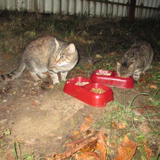 Kvalitní krmivo pro kočky bez domova