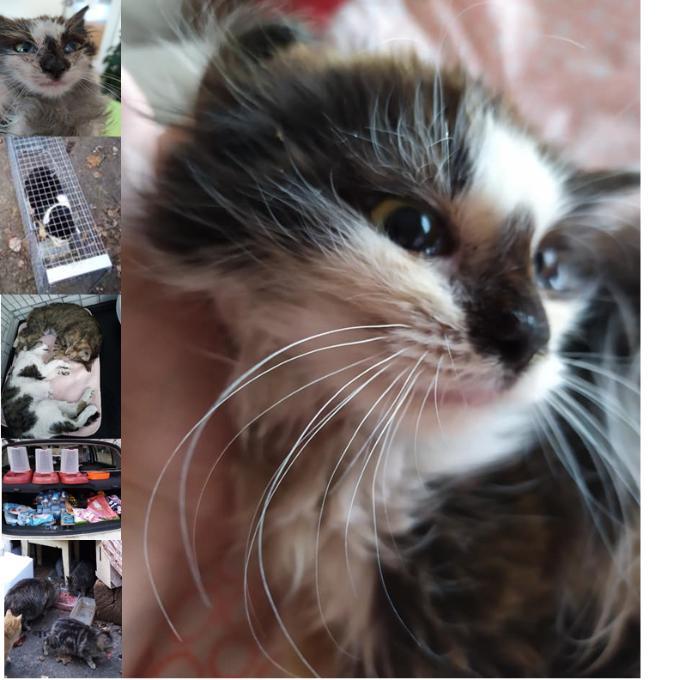 Kastrační program a veterinární péče