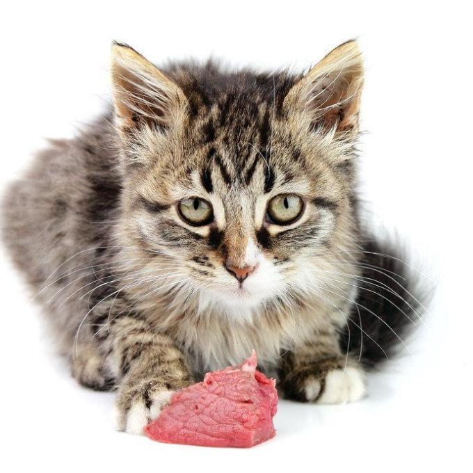 Maso pro kočičky z kravína