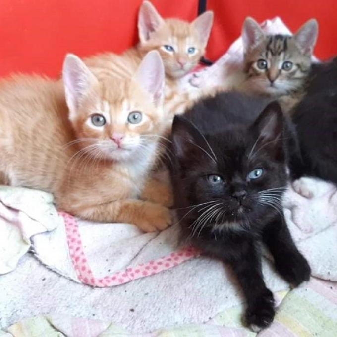 Vakcíny pro koťata