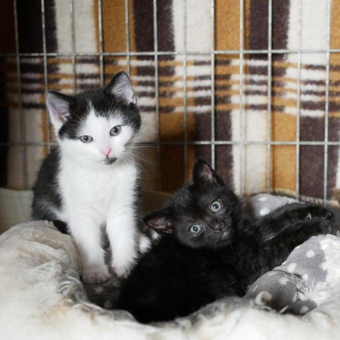 Očkování  pro koťátka z Tlapek
