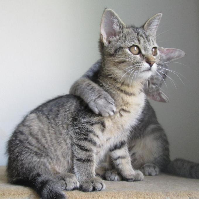 Maso pro koťata