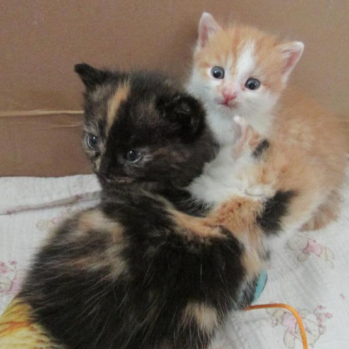 Konzervičky pro koťata