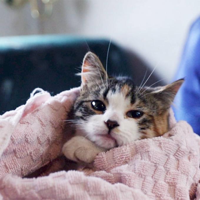 Uropet gel pro nemocné kočky