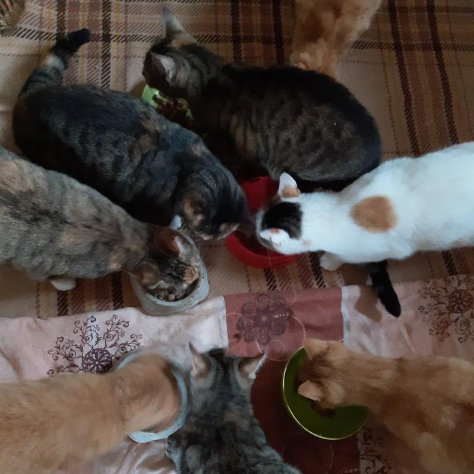 Příspěvek na pozůstalé kočky