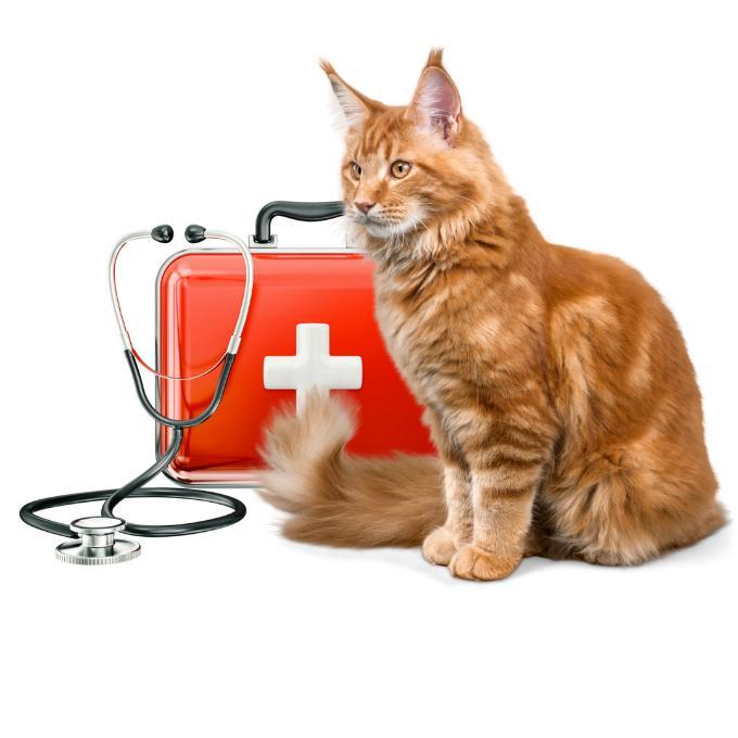 Veterinární péče pro Tlapky Mochov