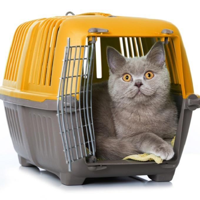 Přepravky pro plzeňské kočičáky