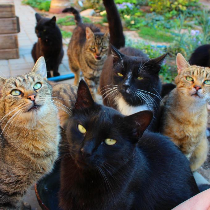 Kočky by kupovaly....