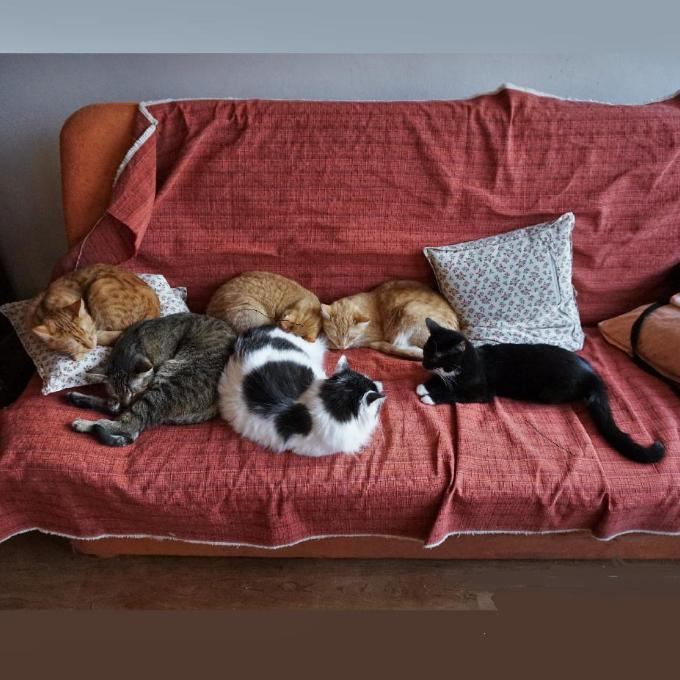 Očkovací vakcíny pro kočičáky od Fredíka