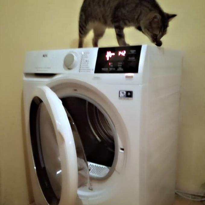 Sušička pro Kočičí dům u Mourečka