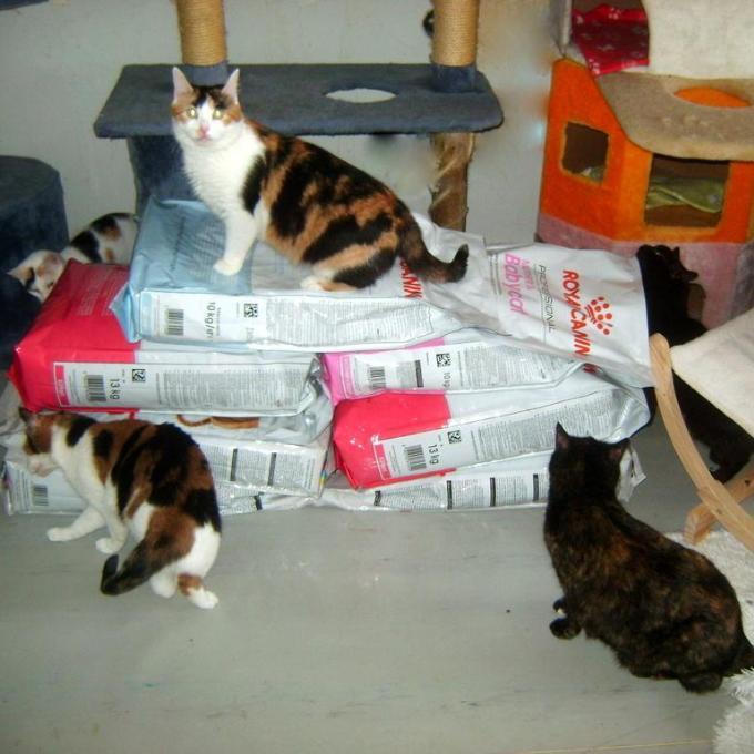 Granulky pro kočičky Šance pro kočku