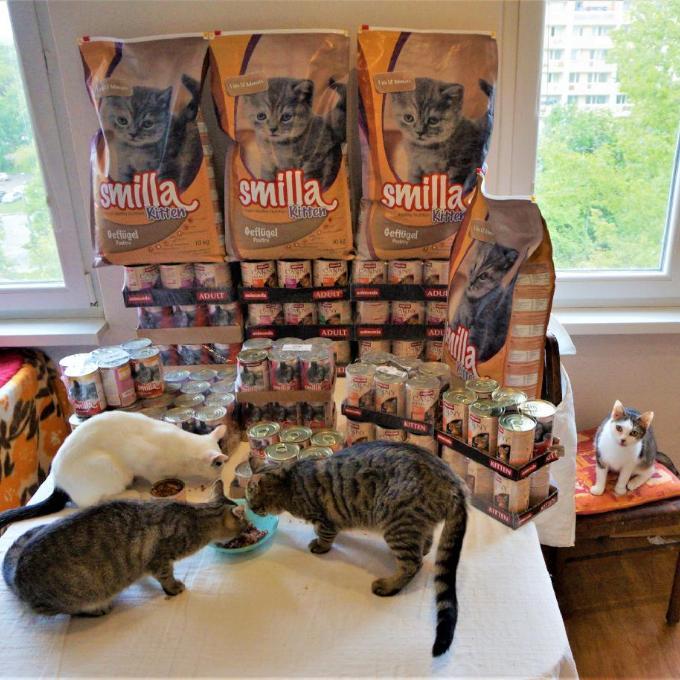 Kvalitní krmení pro koťata