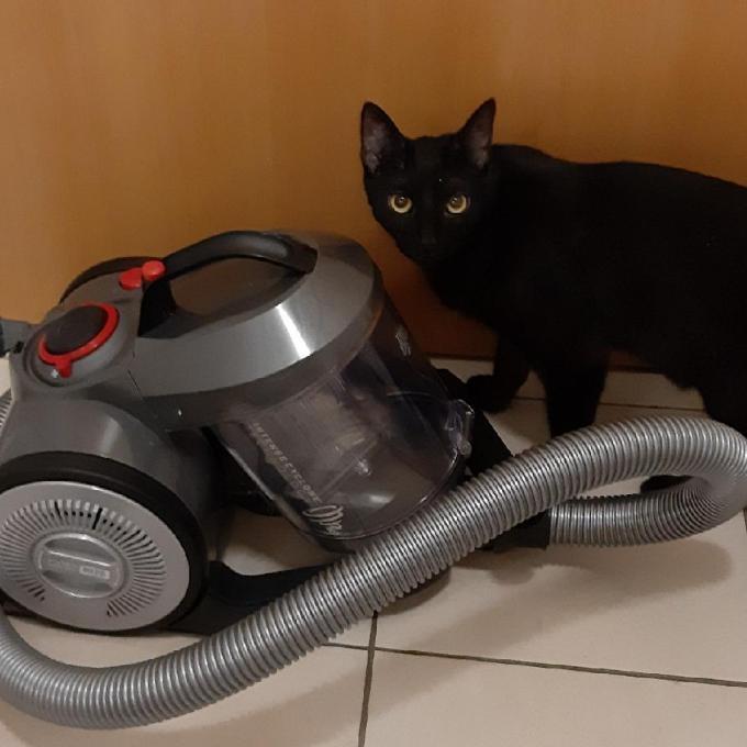 Vysavač pro Cat World