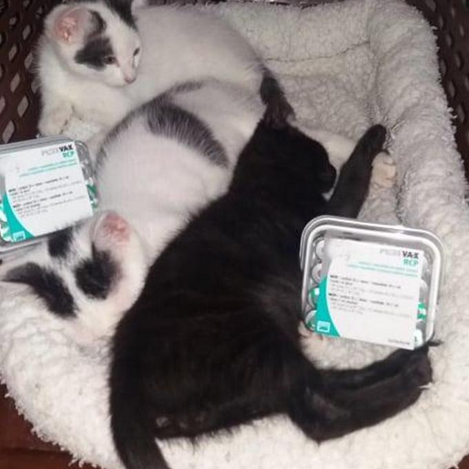 Vakcinace pro koťátka