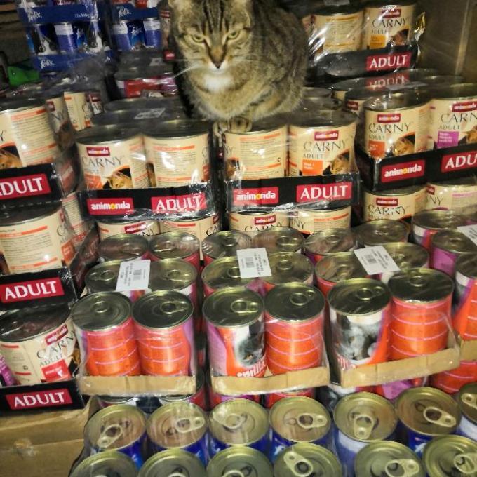 Konzervy pro bruntálské kočky
