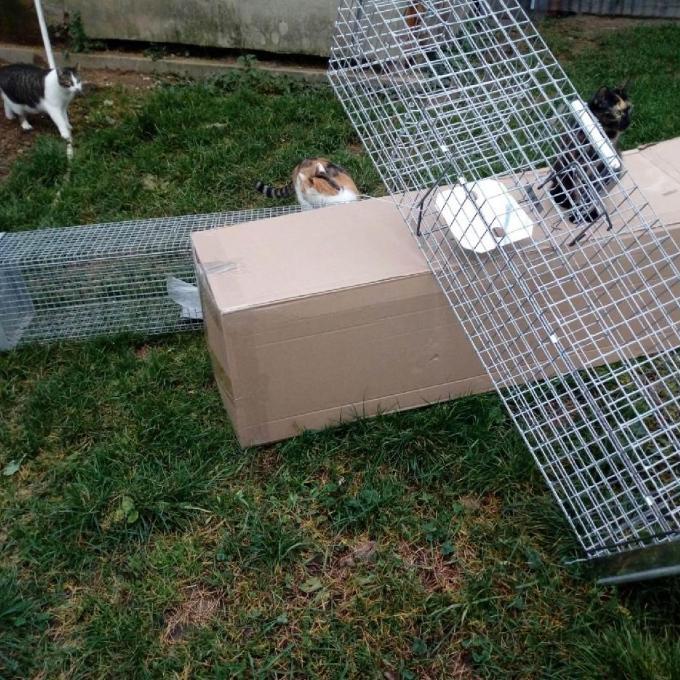 Sklopce na odchyt koček