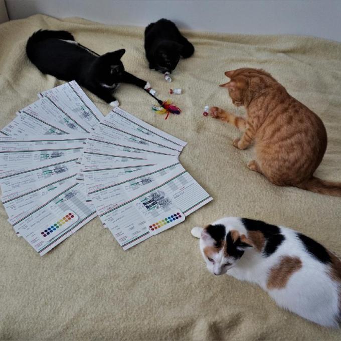Očkovací vakcíny pro koťátka