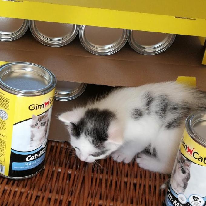 Mlíčko pro kočičí sirotky