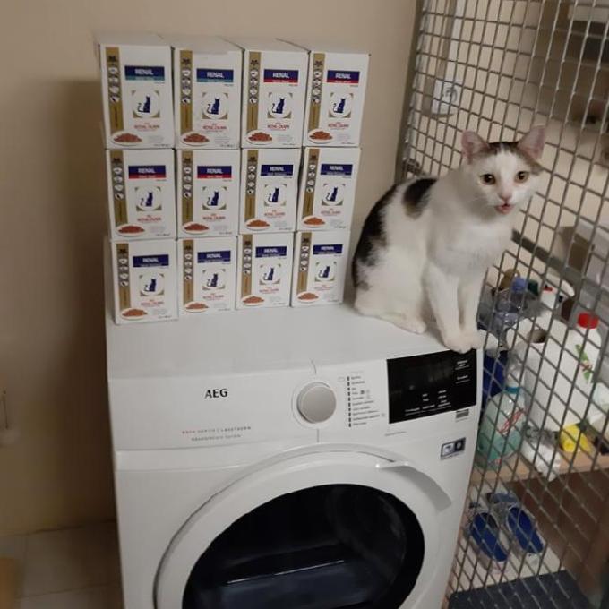 Ledvinová dieta pro kočky u Mikeše