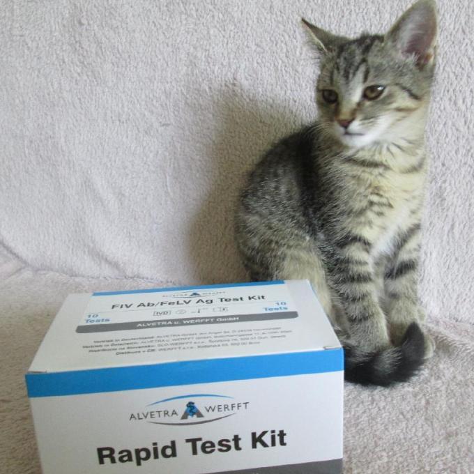 Testy na FIV a FeLV