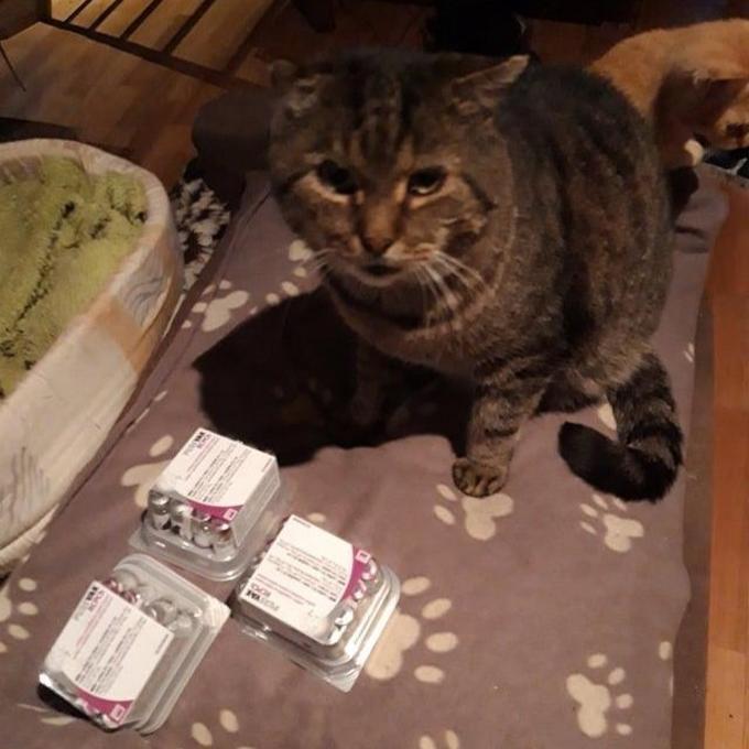 Velké kočičí očkování