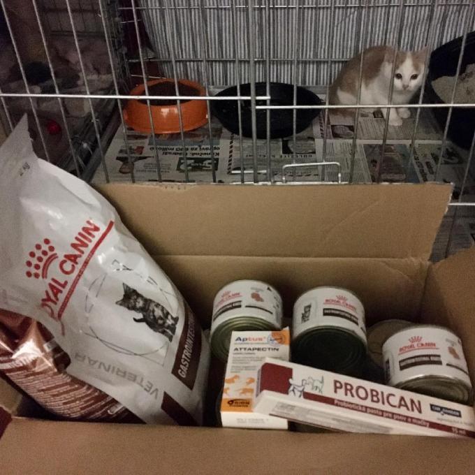 Dieta pro koťátka