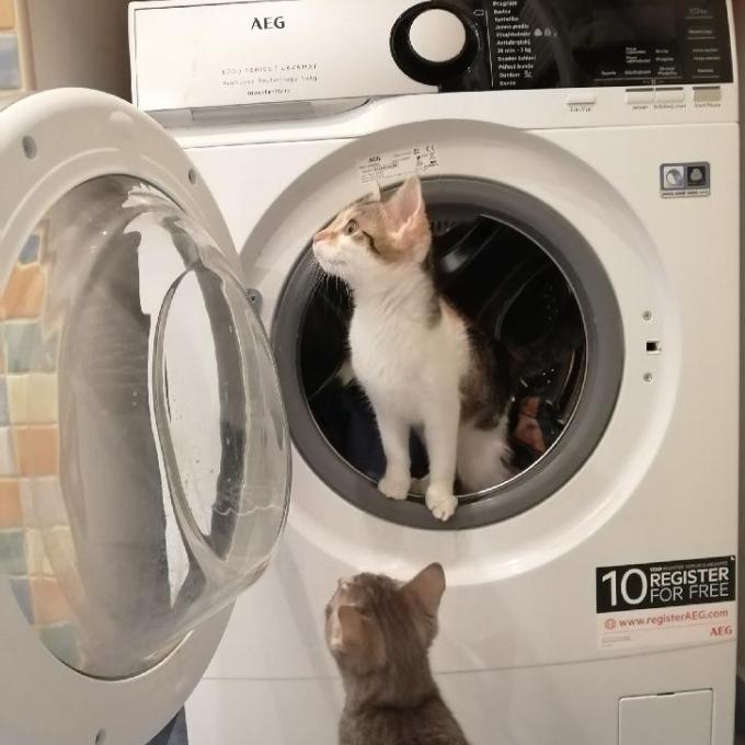Pračka pro CATKY Praha