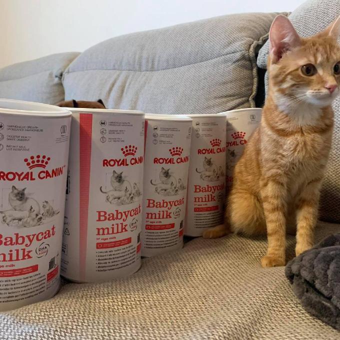 Royal Canin mléko pro kočičí mimina