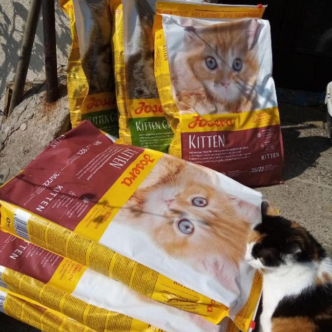 Kvalitní granule pro koťátka