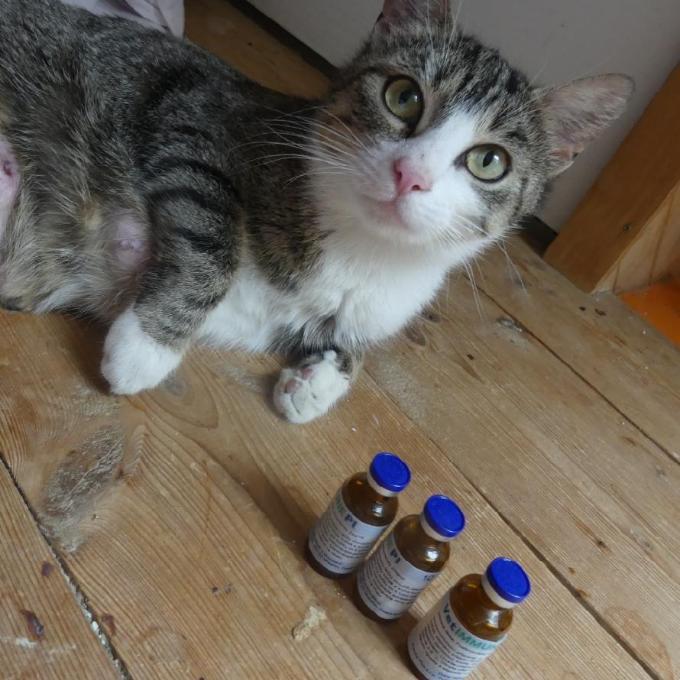 Podpořme kočičí imunitu