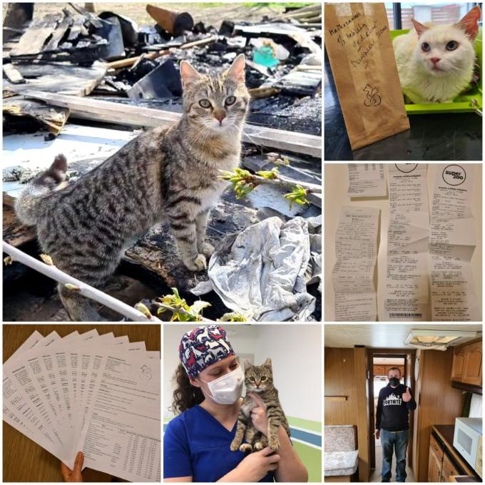 Pomoc pro zvířata pána bez domova