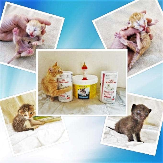 Kvalitní sušené mléko pro koťátka