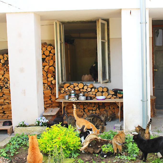 Kočičí Podlaží 2