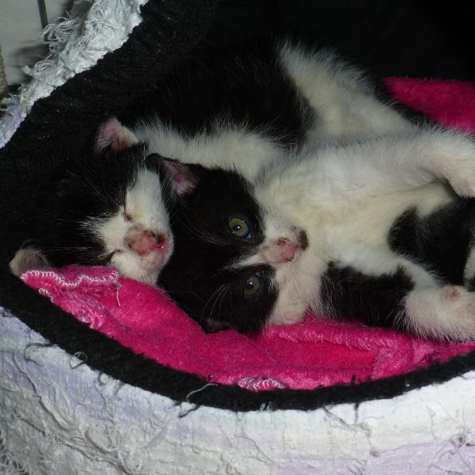 Antibiotika pro nemocné kočičky