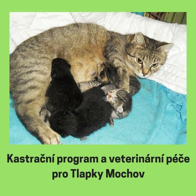 Veterinární péče a kastrační program