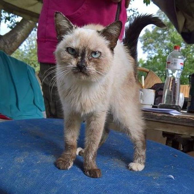 Pomoc pro kočky, které patří lidem bez domova