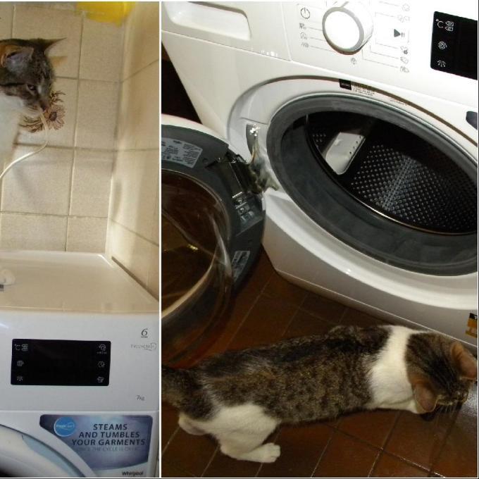 Pračka pro depozitum Kočičí dům u Mourečka