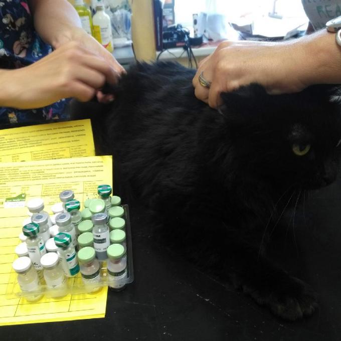 Očkování pro kočky